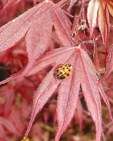 Butterflies, Dragonflies, Ladybugs, Assorted Other Creepy Crawly Things